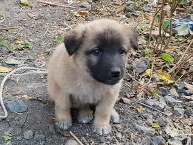 H1811_new pups2