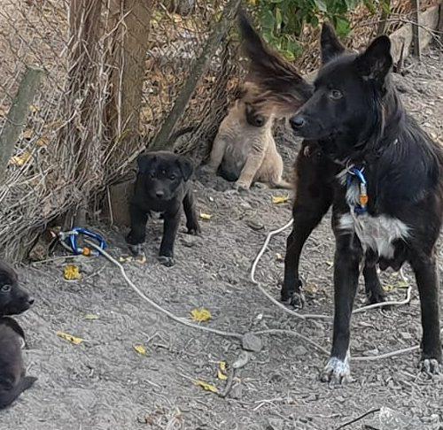H1811_new pups3