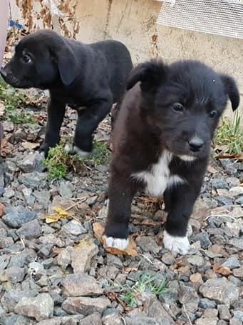 H1811_new pups4