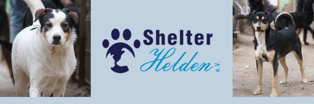 Shelterhelden e.V. – Jede Pfote zählt!